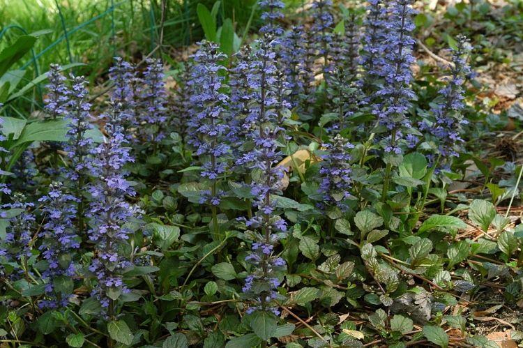 Bodendecker Fur Schatten 10 Pflanzen Die Sich Gut Eignen