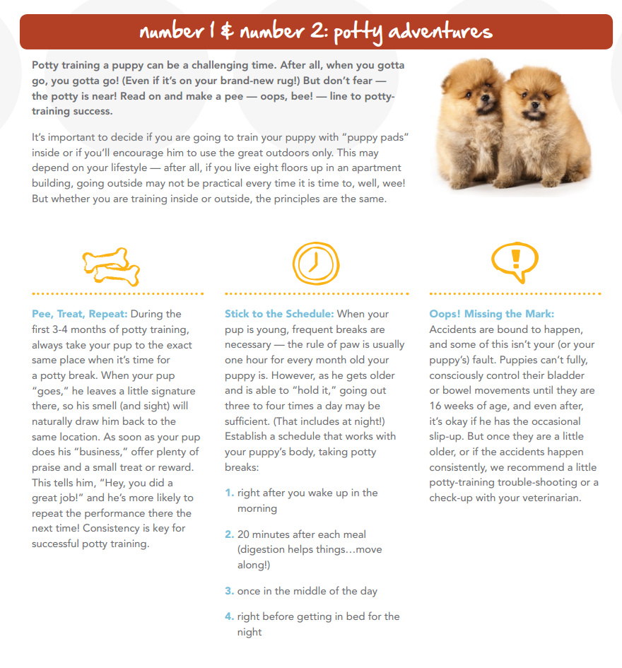 3 Tips For Potty Training New Pets Puppy Potty Training Tips Puppy Training Potty Training Puppy