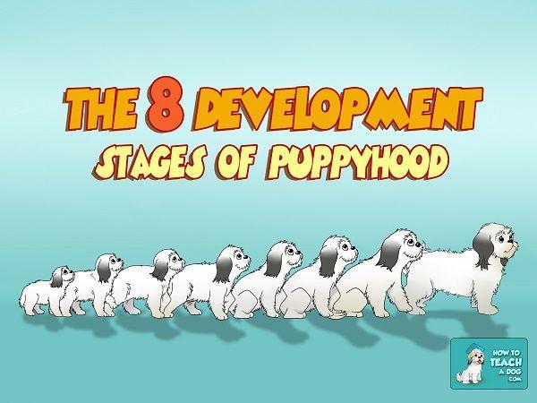 The Development Stages Of Puppyhood Httpwwwhowtoteachadog - 26 dogs puppyhood photos