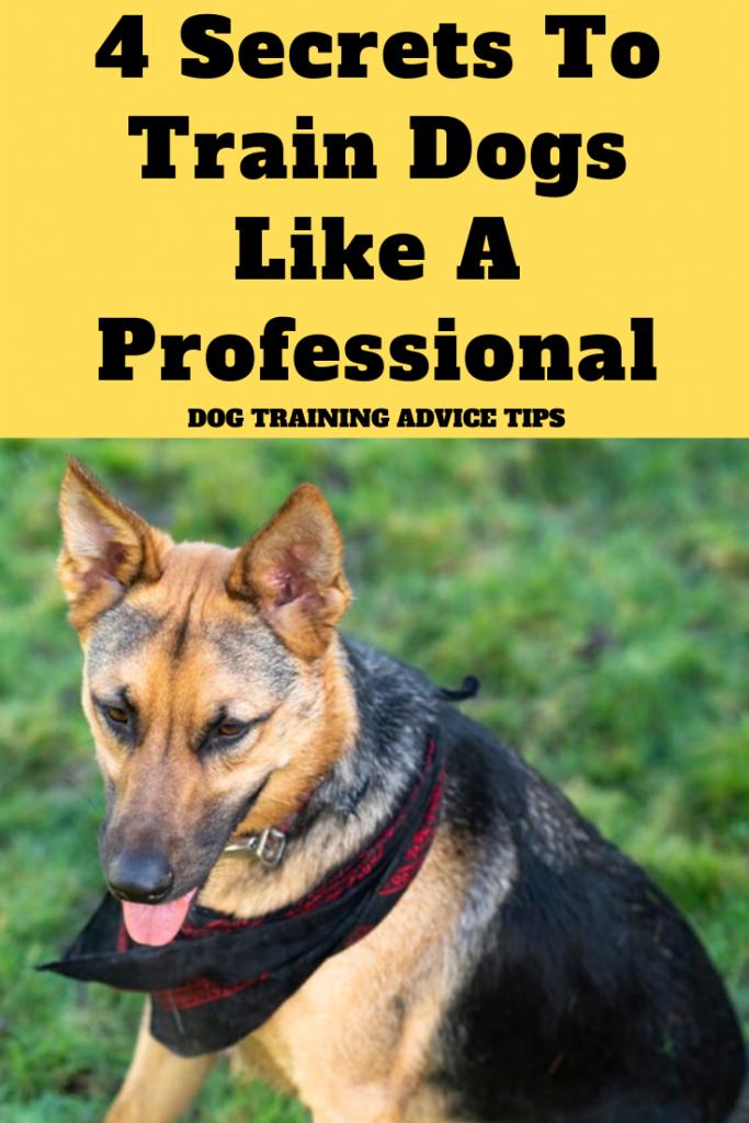 4 Secrets To Train Dogs Like A Professional Dog Training Advice Tips Professional Dog Training Dog Training Advice Dog Training