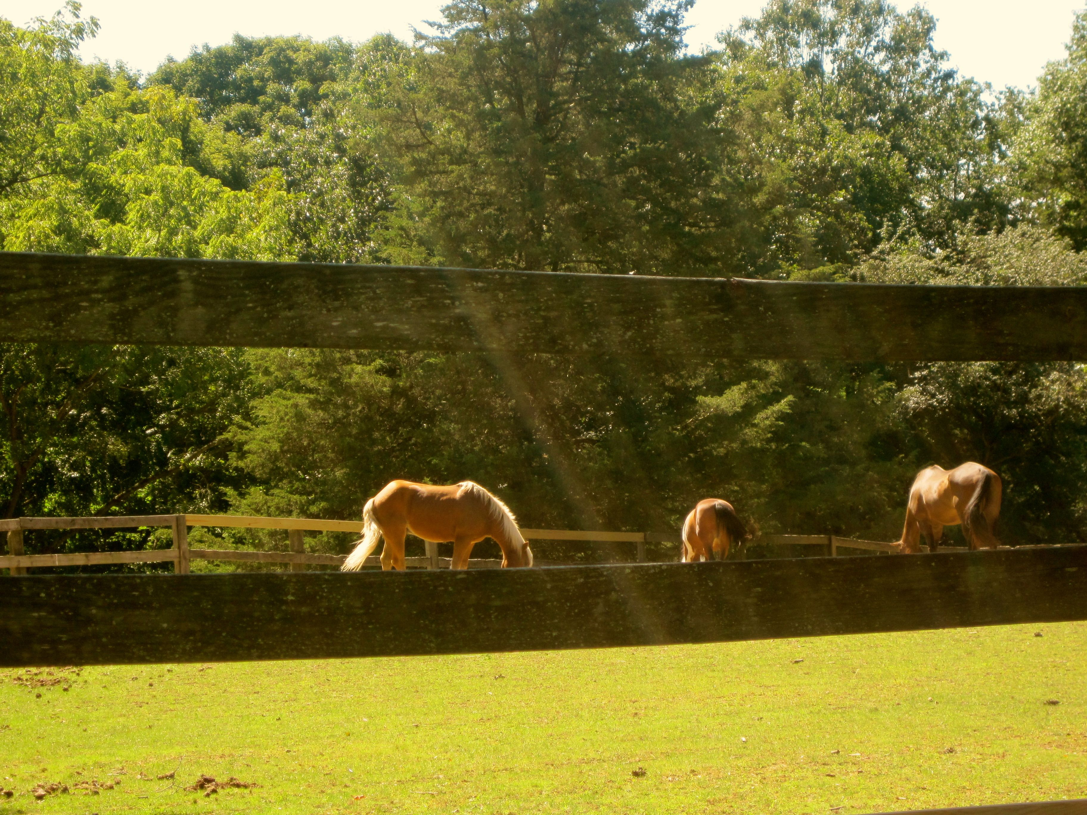 Ray of Light Over Horses.....A Serene Moment in Time, taken in upstate NY on one of my Sunday drives this Spring :)