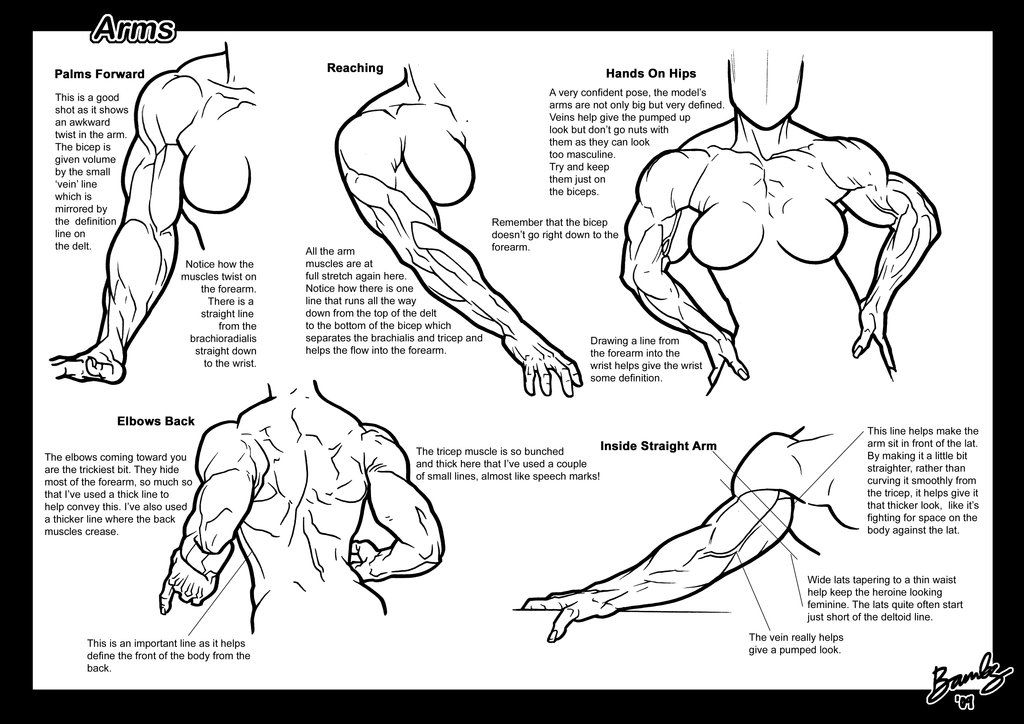 Page 3 of the Arms Tutorial. Muscular female anatomy comic or ...