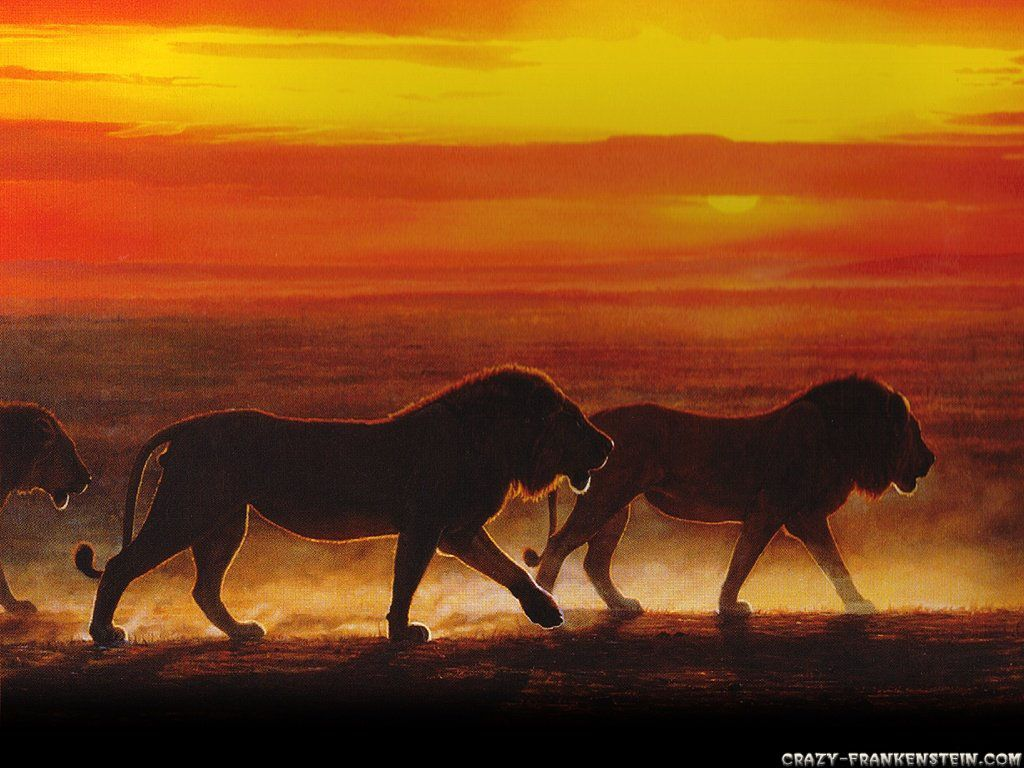 African Sunset with Animals | Sunset in Kenya Animals ...
