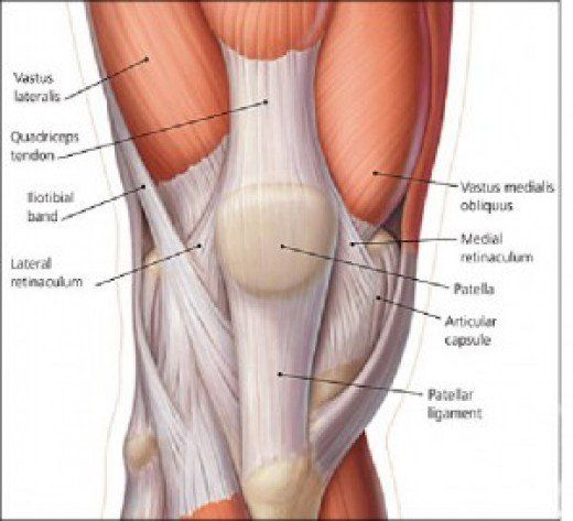 squats made simple seventeen different types of squats exercisemuscles surrounding the knee