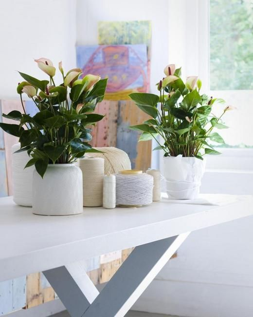 Decorating small apartments and homes with indoor plants also great house for rh pinterest