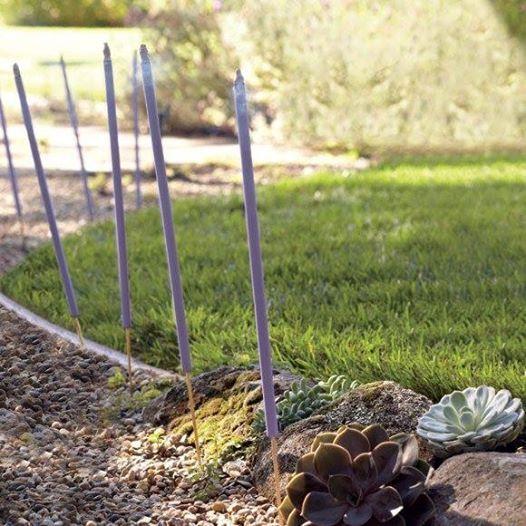 Sitrushedelmä-puutarhasuitsukkeet tuoksuvat hyvältä ja häätävät ei toivotut inisijät rauhaasi häiritsemästä.