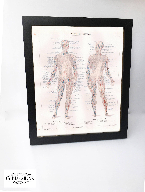 Antique Anatomy Print Original Print From 1896 Medical