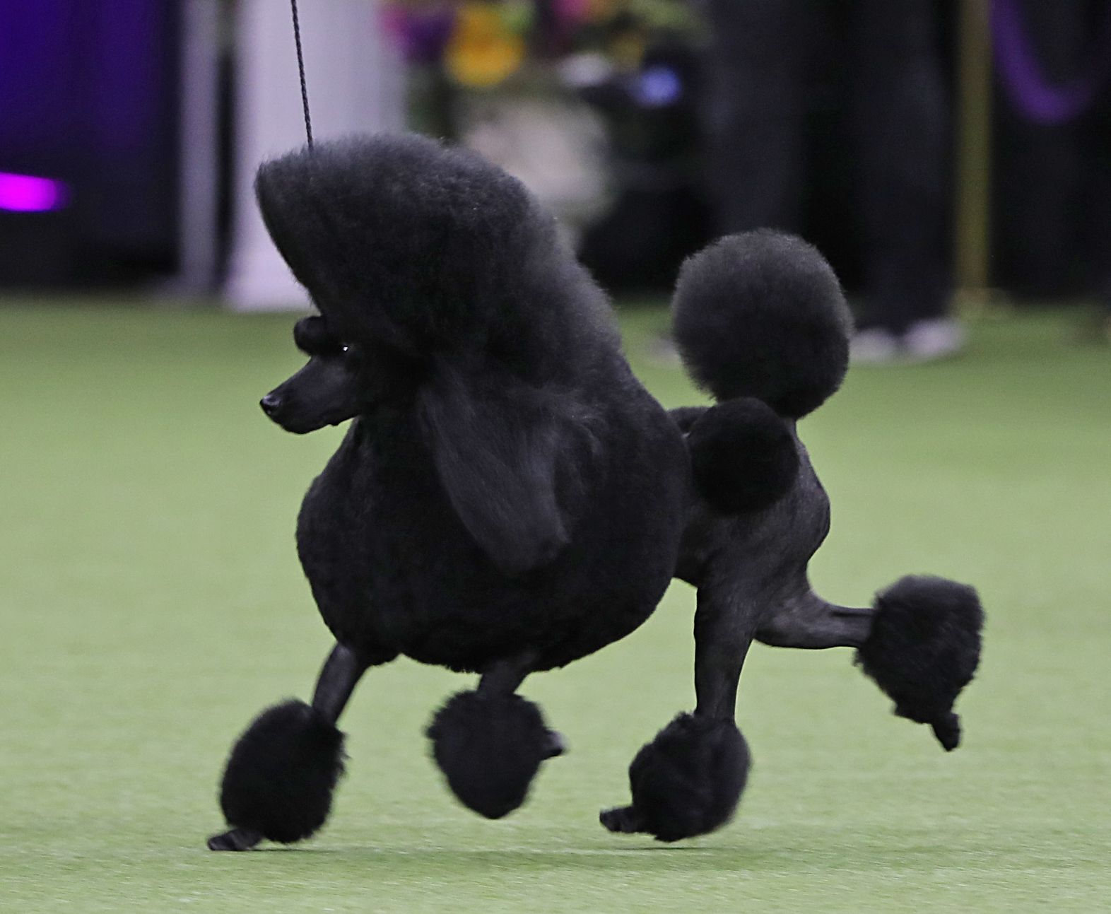 2017 Westminster Dog Show Winners Round Up By Breed Group