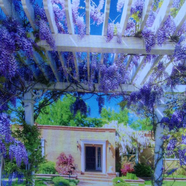 Steel Arbor With Wisteria