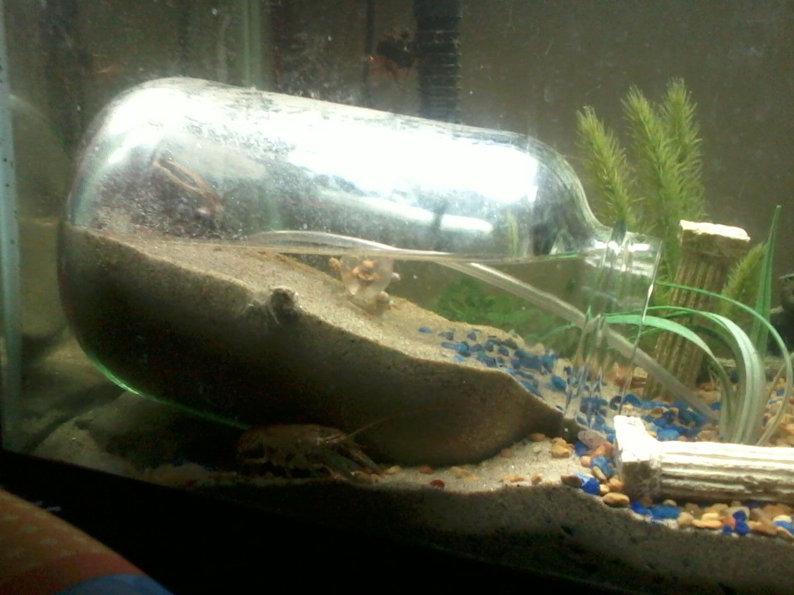 Freshwater fish tank upkeep - I Currently Have A 55 Gallon Fish Tank Up And Running And Needed My 10
