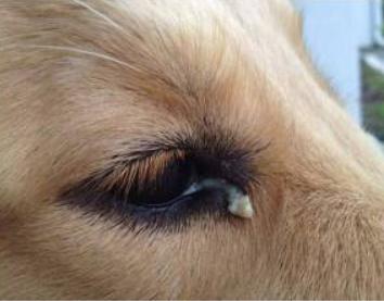 96c3ab00d739c6e9fb2abf41b1e41747 - How To Get Eye Boogers Out Of Dog S Eyes