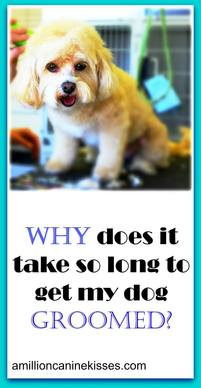Puppy Love Grooming Hours Ideas