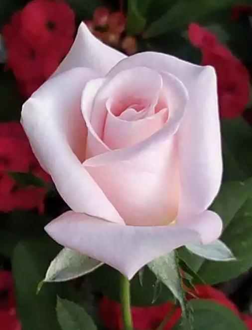 La Flor Que Siempre He Amado Una Maravilla San Sergio Aldana Navarro