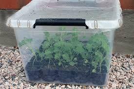 Pienois kasvihuone siementen esikasvatus ajalle .