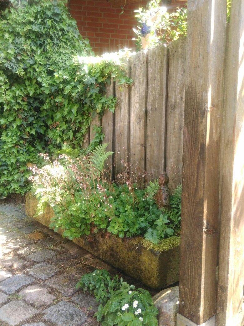 Alter Schweinetrog Mit Pflanzen Pflanzen Giessen Pflanzen Garten