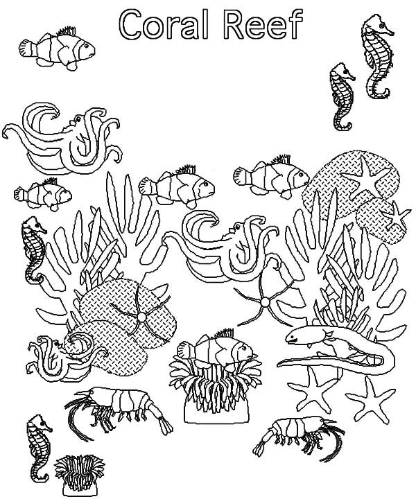 Coral Reef Fish, : Fish in Coral Reef Ecosystem Coloring