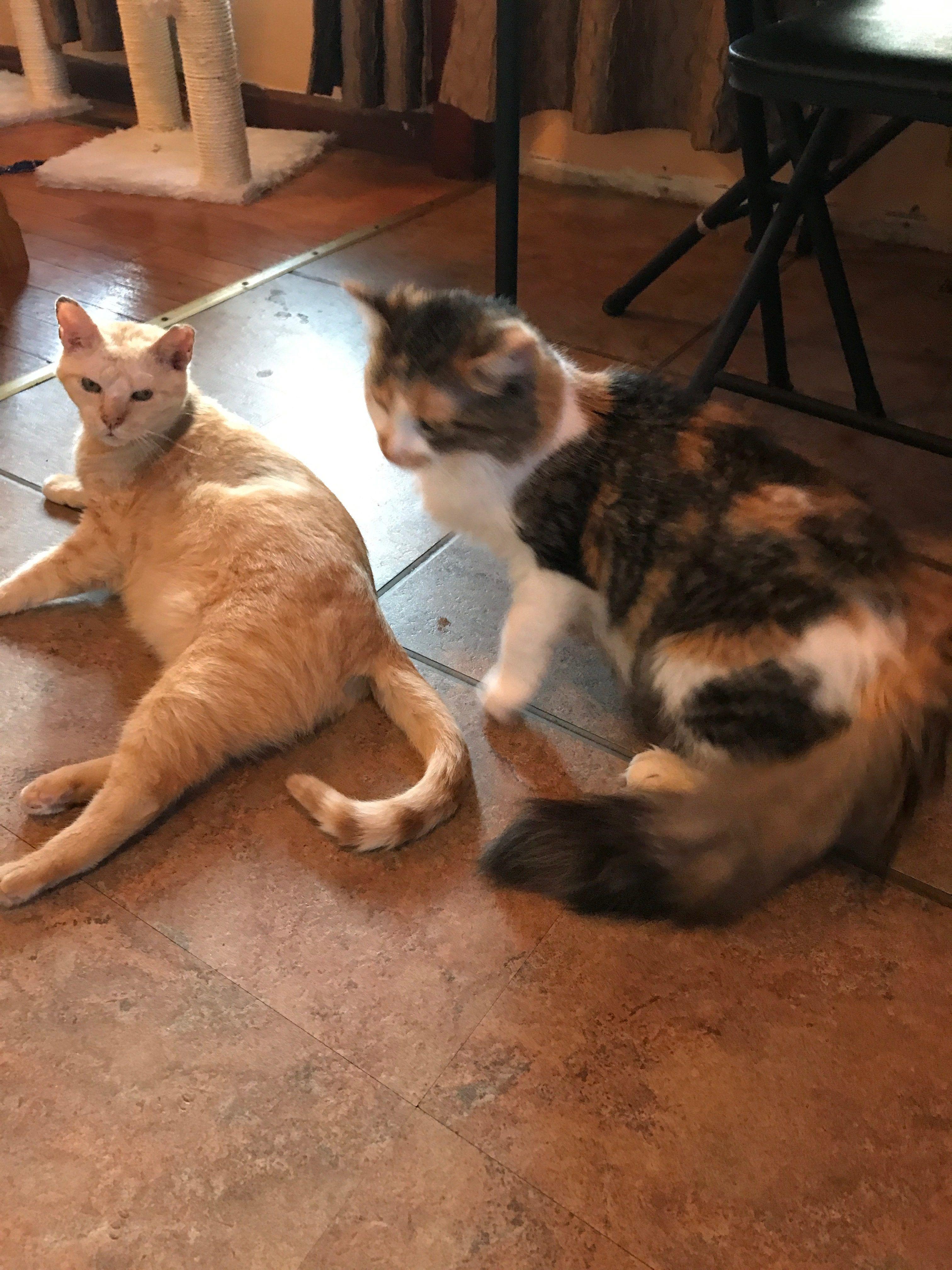 Cat Adoption Providing A Home For Rescue Cats Cat Mama Cat Lover Cat Adoption Mama Cat Cat Rescue