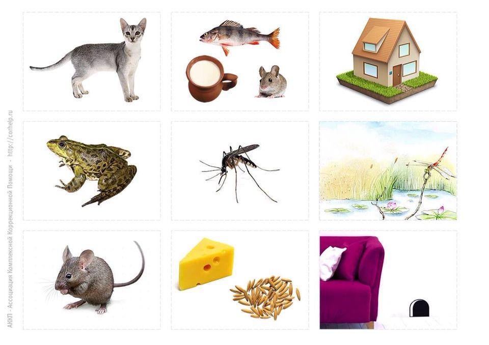 животные кто чем питается в картинках хотя
