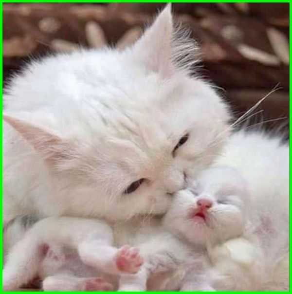 Gambar Kucing Lucu Imut Dan Paling Menggemaskan Sedunia Cute Kittens Gambar Kucing Lucu Kucing Lucu