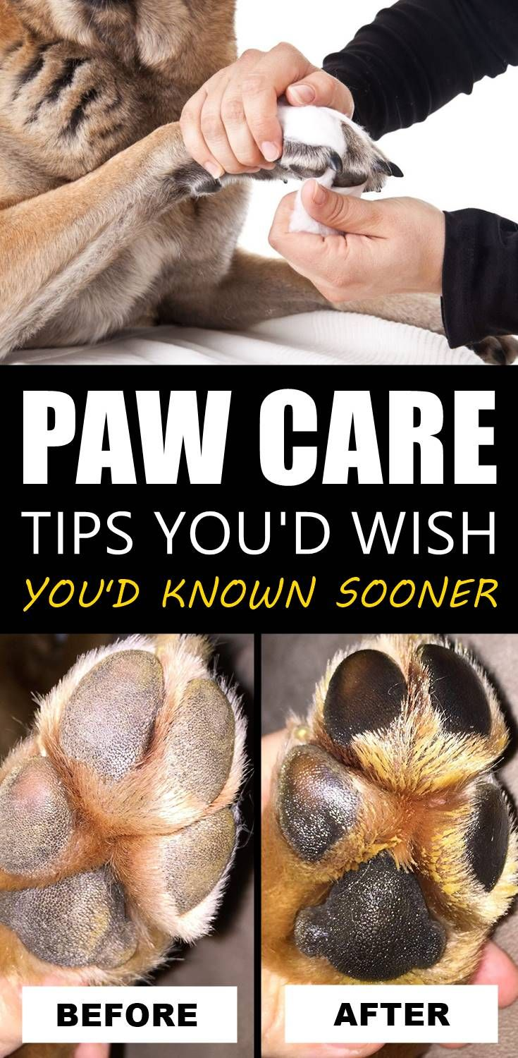 5 Tips To Care For Your Dog S Paws All Year Around In 2020 Paw Care Dog Paws Dog Paw Pads