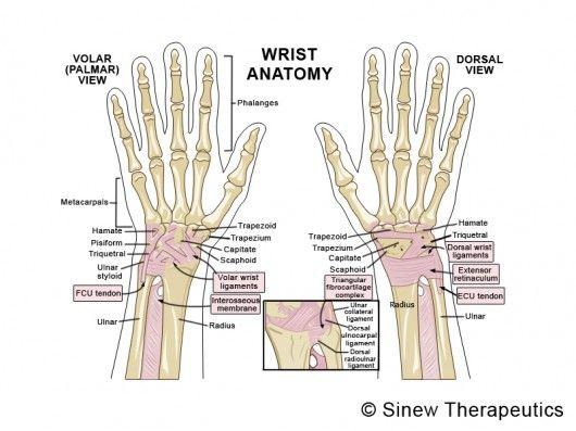 wrist anatomy pictures | Wrist Sprain Strain Information - Sinew ...
