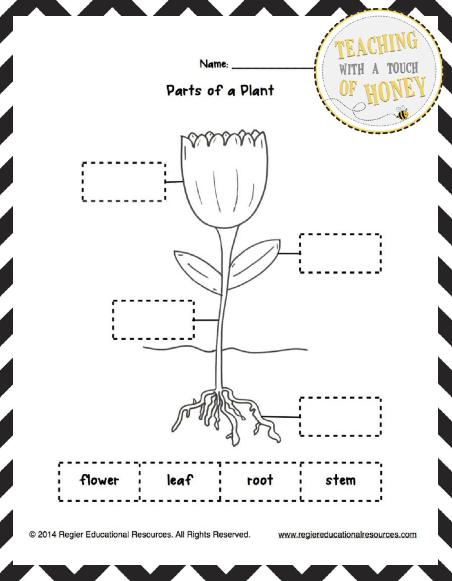 Freebie This Freebie Contains Three Tiered Templates For Labeling A Plant Plants Worksheets Kindergarten Worksheets Parts Of A Plant