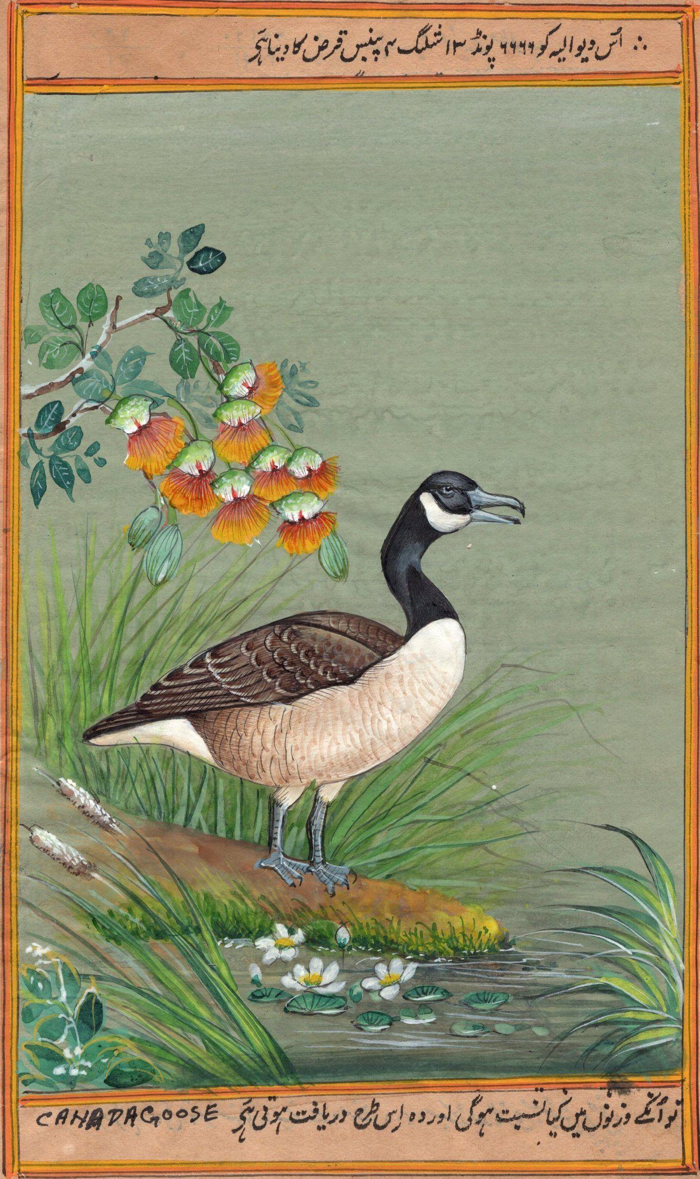 canada goose name in tamil