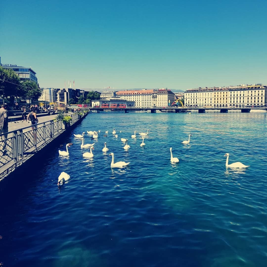 Cygne Ou Signe Si Tu Vois Un Oiseau Blanc Au Milieu Du Lac C Est Un Signe Mais S Il Y En A 20 C Est Quoi In 2020 Canal Structures