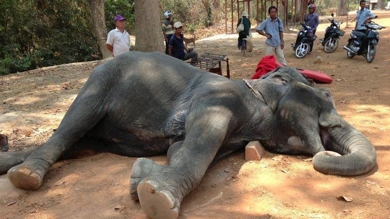 Pétition · APSARA Authority: End Elephant Riding at Angkor, Siem Reap · Change.org