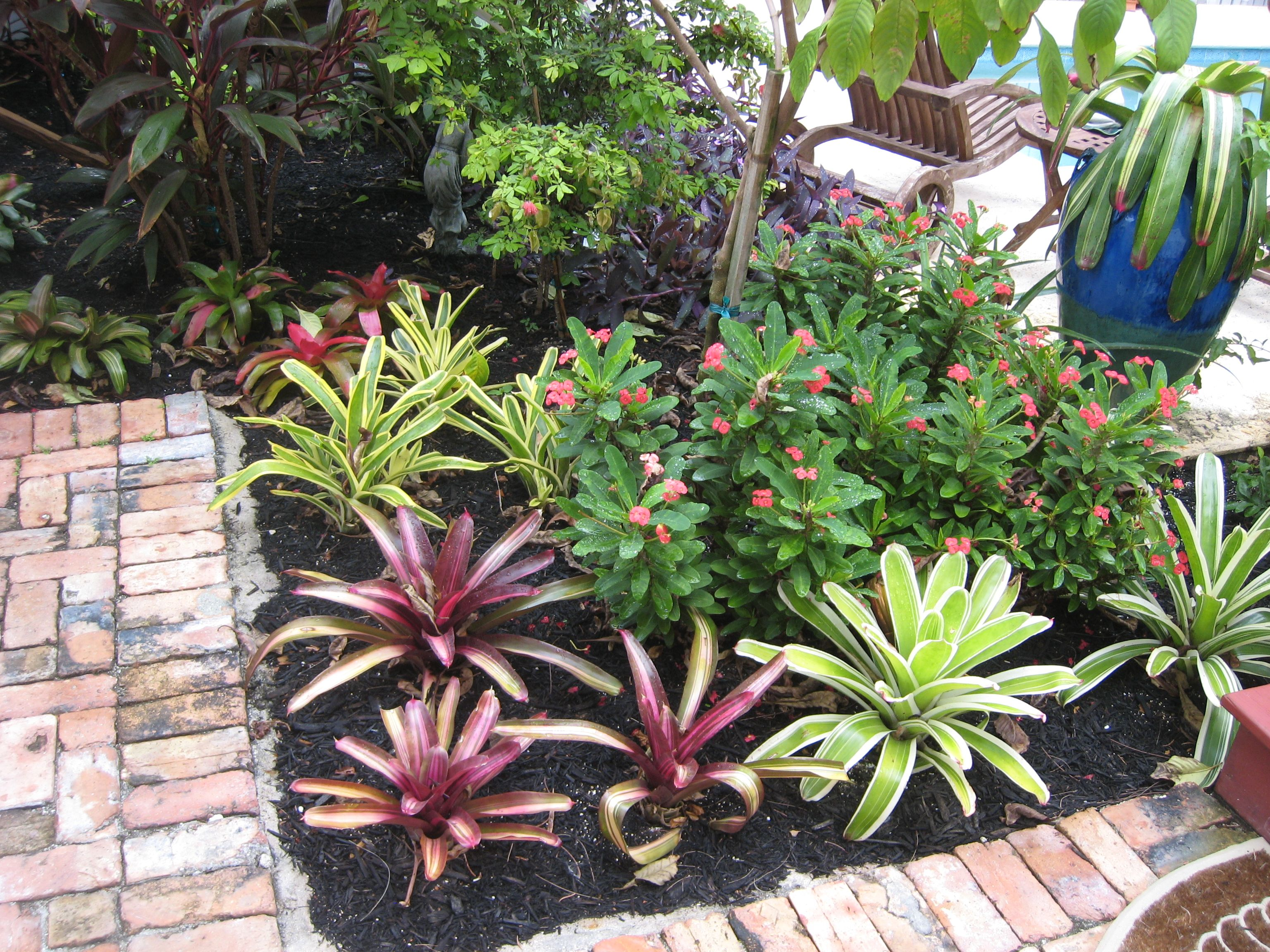 Bromeliad Bed Boasts Vibrant Color With Help Of Black