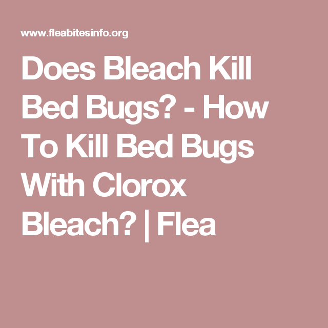 Does Bleach Kill Bed Bugs?   How To Kill Bed Bugs With Clorox Bleach?