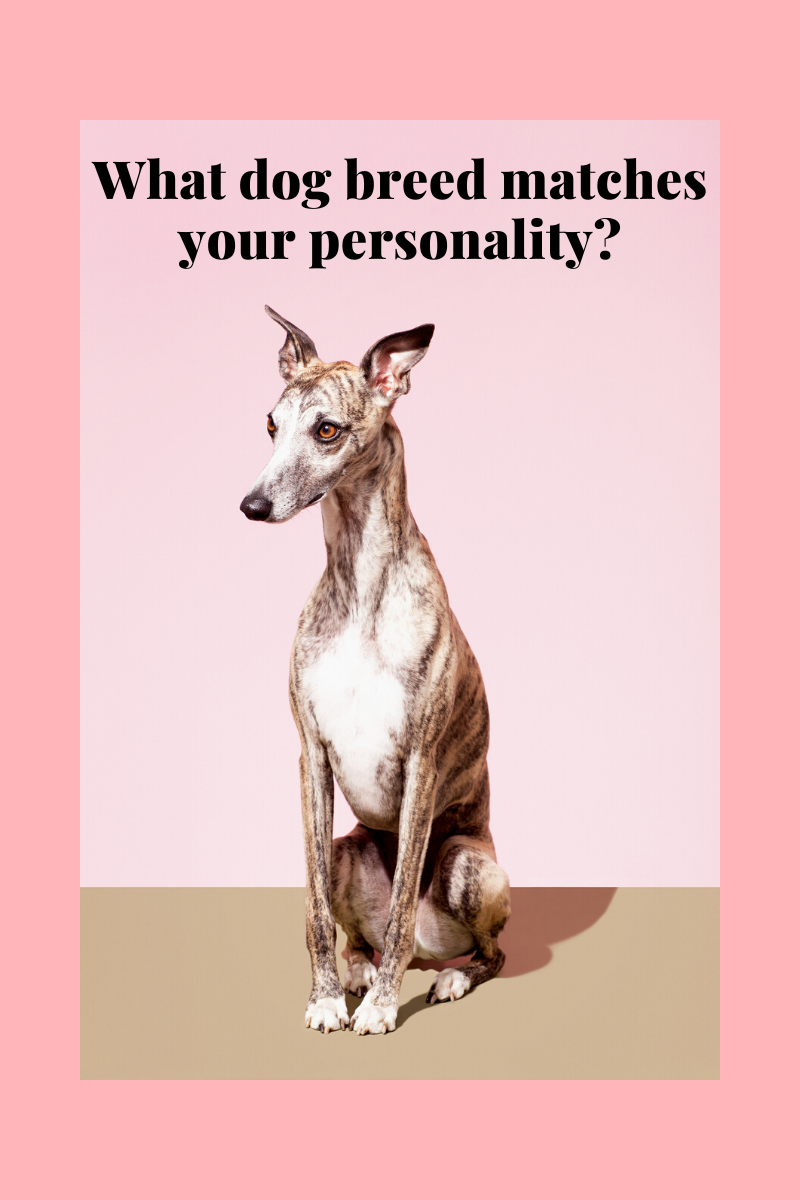Take This Quiz To Find Out Which Dog Breed You Were Meant