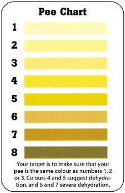 The Pee Chart Testing    How Many Glasses Of Water Do You