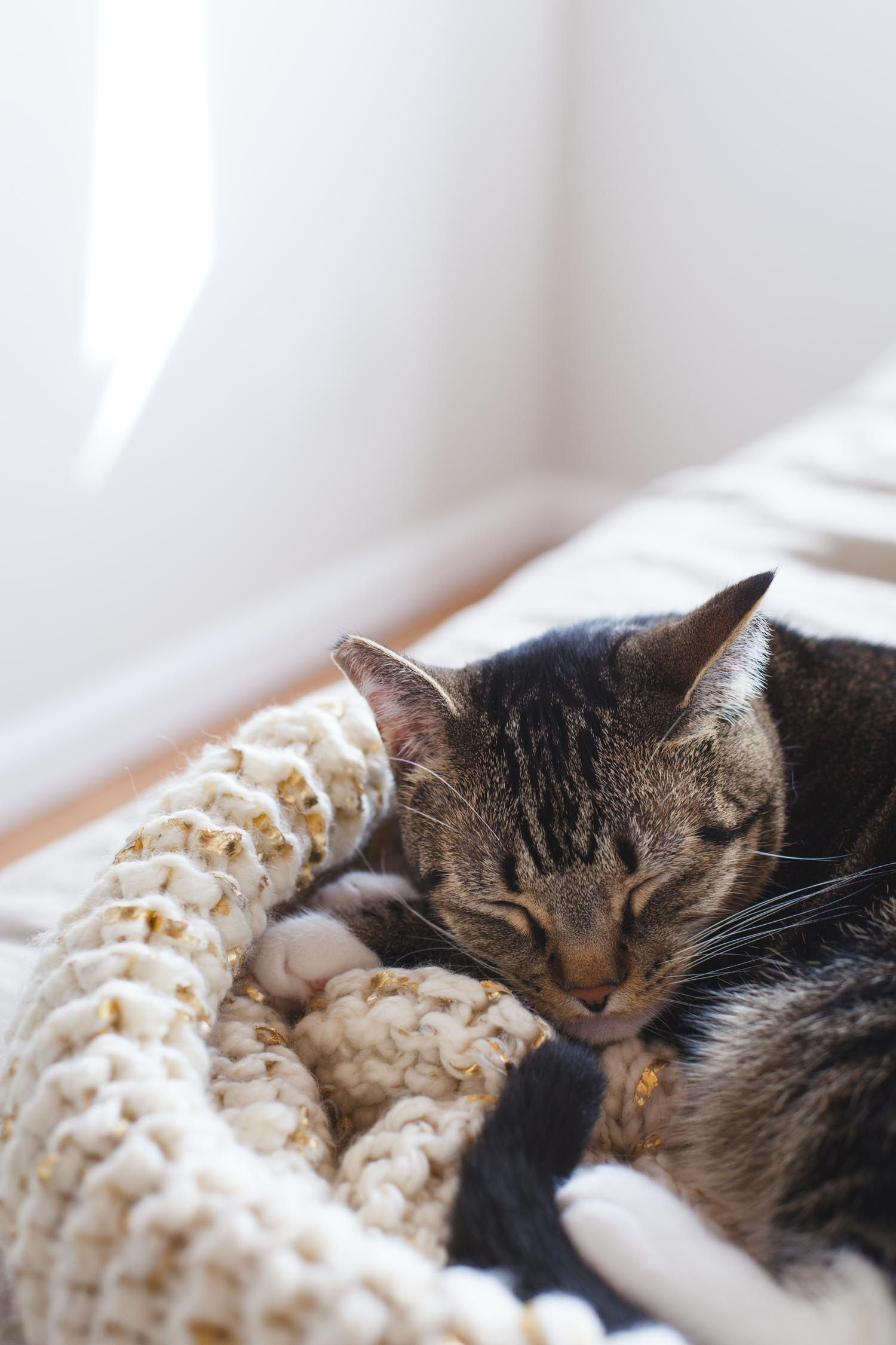Crafts and a Cat | Knit Cat Bed and Bisou by Kayleigh Kosmas | craft ...