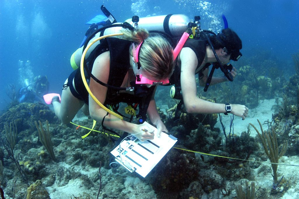 How to Select a Marine Biology Program Really helpful because I - marine biologist resume