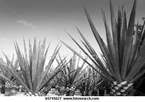 néctar de agave y diabetes