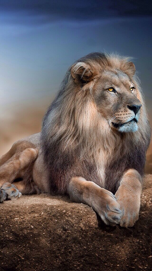 LION IPHONE WALLPAPER, BACKGROUND | IPHONE WALLPAPER / BACKGROUNDS | Pinterest | Animals, Cats ...