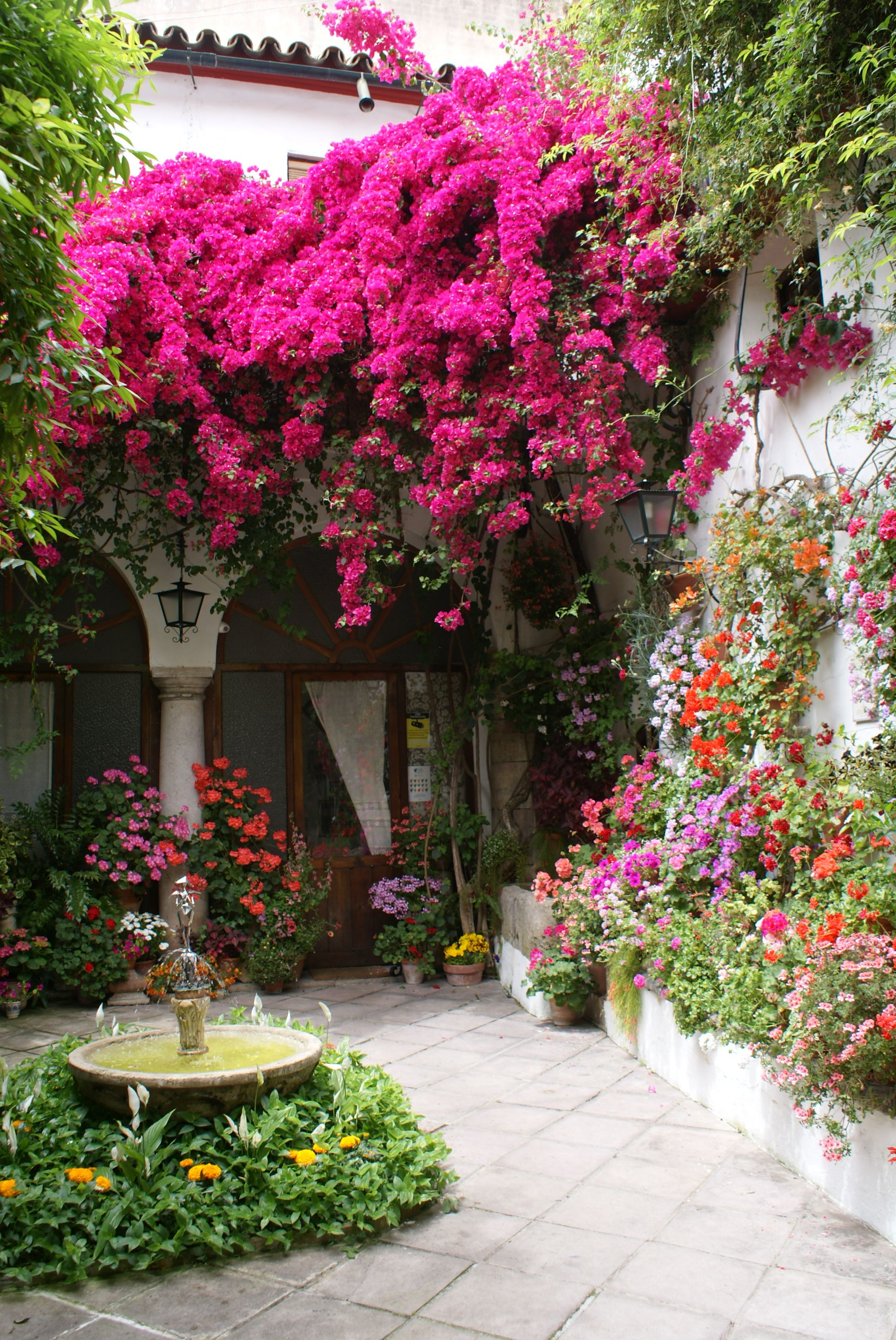 stunning and colorful courtyard