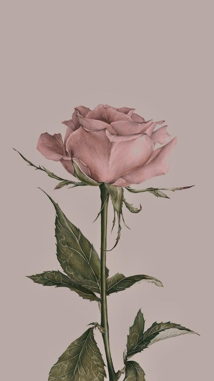 Flower 🌸 Wallpaper/background