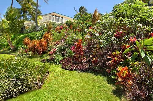 Selected Landscape Tropicals For Galveston And The Texas Upper Gulf Best Backyard Paradise Landscaping Ideas