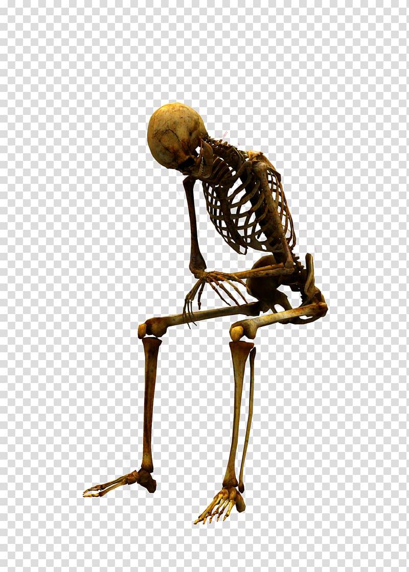 Human Skeleton Sitting Human Skeleton Arabic Calligraphy Skeleton Transparent Background Png Clipart Human Skeleton Skull Illustration Skeleton Anatomy