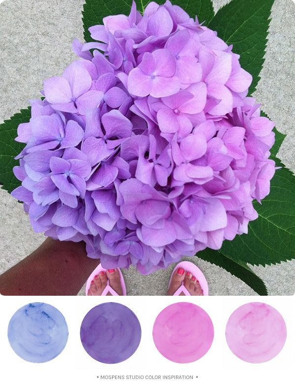 Graduated Colorful Hydrangea Flower Wedding Color Inspiration Mospensstudio