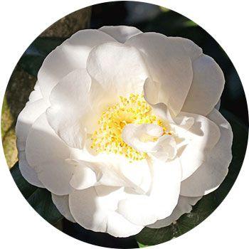 48 Types of White Flowers - ProFlowers Blog