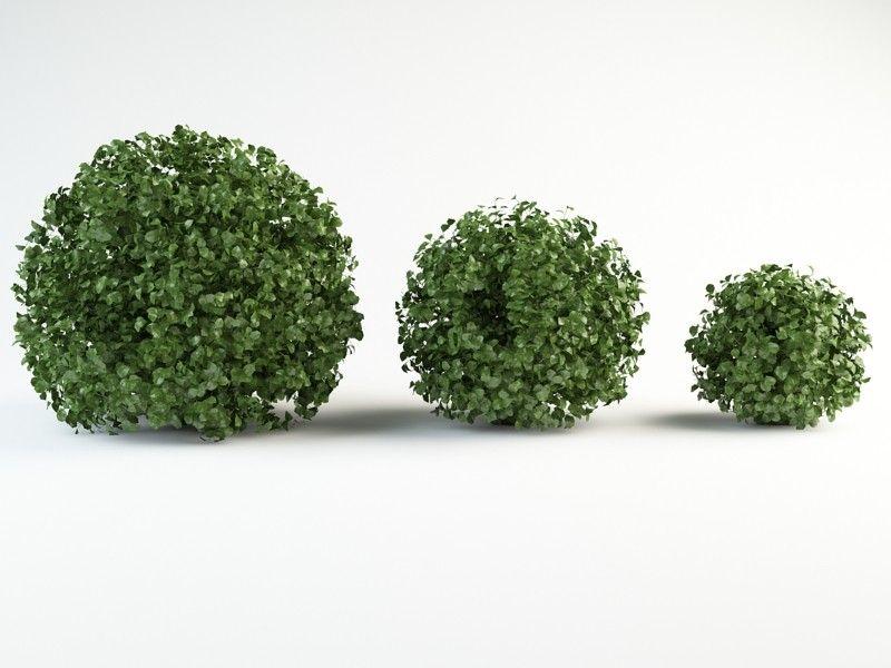 hedge photoshop brush - Szukaj w Google | Plants psd | Pinterest ...