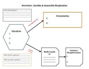 Graphic organizer cell respiration aerobic anaerobic respiration graphic organizer cell respiration aerobic anaerobic ccuart Gallery