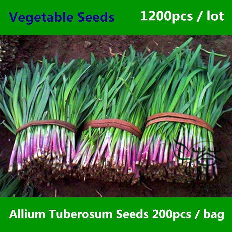 Allium Tuberosum Seeds 1200pcs Garlic Chives Vegetable Seeds Chinese Leek Oriental Garlic Vegetable Seed Seeds Growing Chives