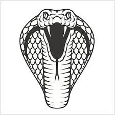 image result for viper snake head drawing drawing serpientes Yellow Jacket Mustang image result for viper snake head drawing