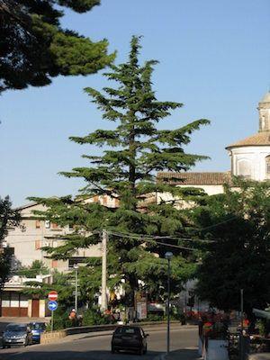 """Il maestoso """"albero di Natale"""" di Pianella"""