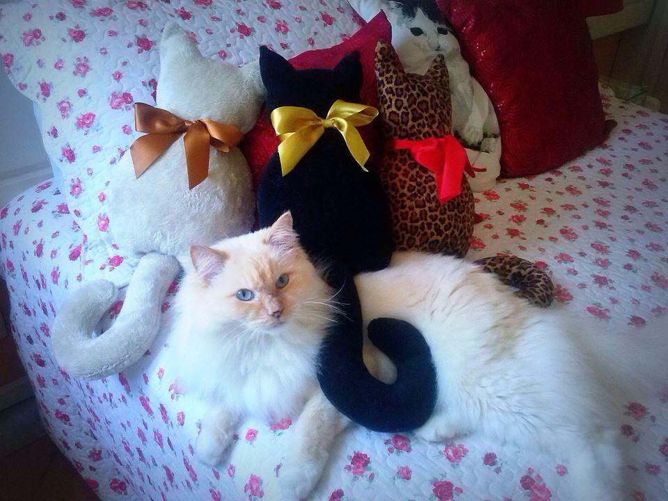 Almofadas de gatos.