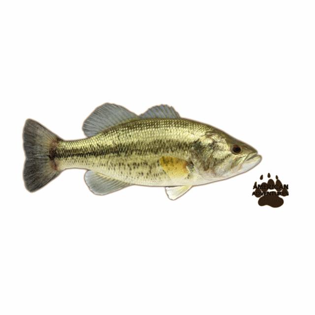 Largemouth Bass Jimmyzhoopz Zt2 Download Library Wiki Fandom Powered By Wikia Largemouth Bass Bass Fish Pet